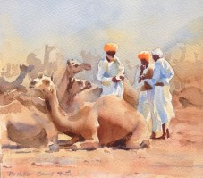 Counting Camels 10 x 11 inches watercolour