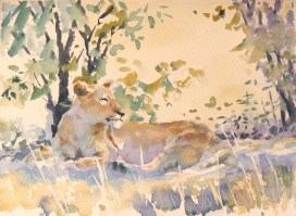 Dappled Light,  Masaai Mara  11 x 14 inches watercolour