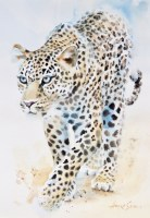 On the prowl 20x14 inches watercolour