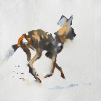 wild dog ballet   12 x 12 inches watercolour
