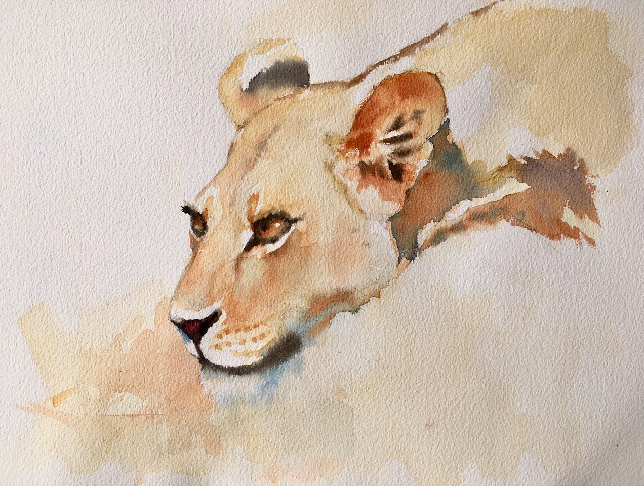 At the water's edge, Kalahari lioness. Watercolour 12 x 16 inches