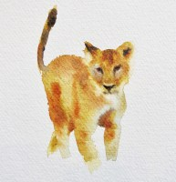 Curious cub 6x6 inches watercolour