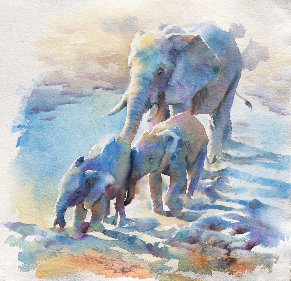 Gentle Nudge 22 x 22 in 56 x 56 cm watercolour