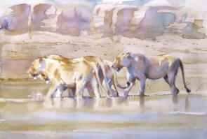 Pacing the South Luangwa  15 x 22 inches watercolour