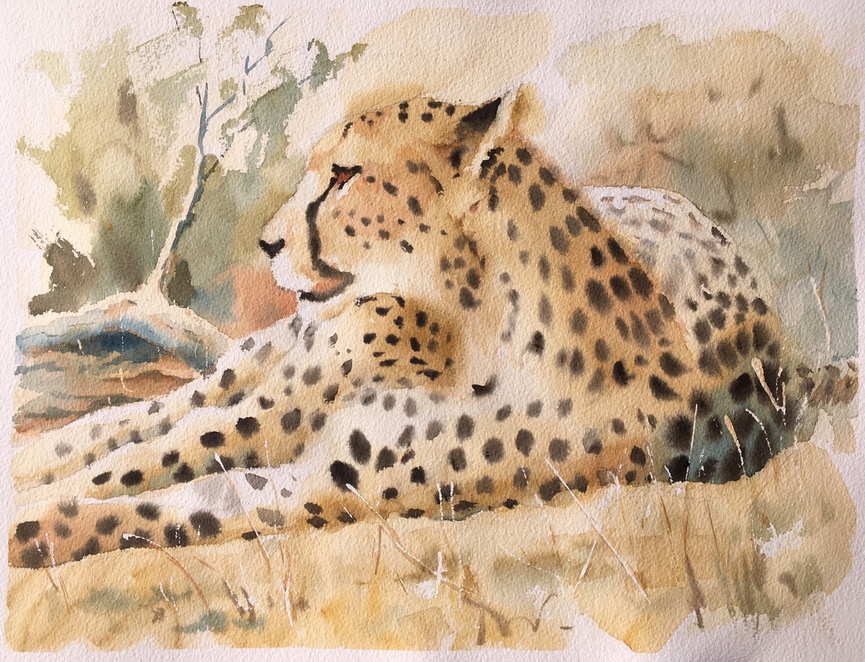 Resting in the shadows.  Watercolour 12 x 16 inches
